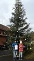 Strom v Dolním Čepí